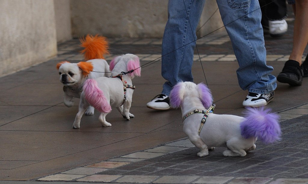 Doggie Streakers