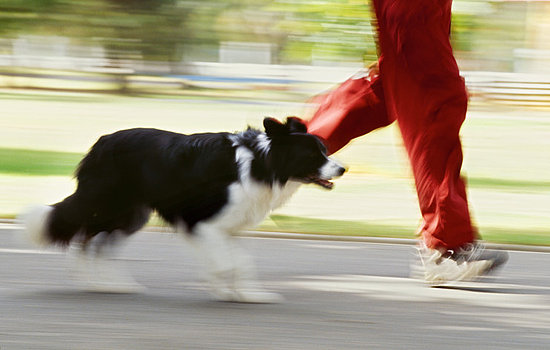 Do Tell: Have You Been Tripped Up by a Pet?