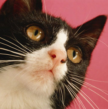 Quiz: Even More Zany Kitty Sayings!
