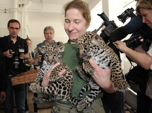 Meet Berlin's Baby Jaguars!