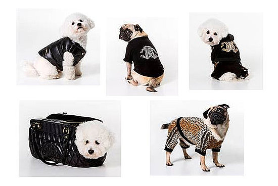 Freaky or Fabulous: Roberto Cavalli Canine Fashion