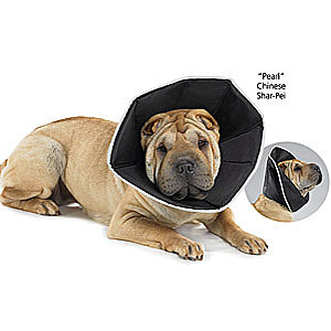 Comfy Cone - Dog Beds Dog Harnesses & Collars Dog Clothes & Gifts for Dog Lovers | In The Company of Dogs