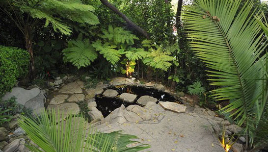 Do You Landscape With Tropical Foliage?