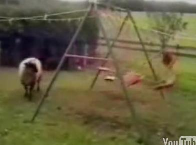Sheep Goes Apesh*t