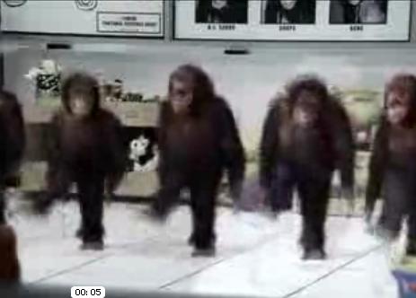 Monkeys + Riverdance = Awesome