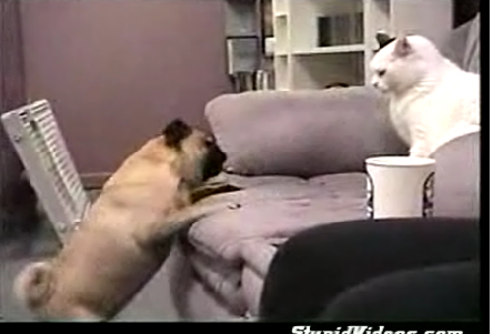 Pug Vs. Cat