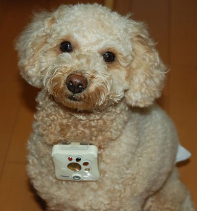Doggie Styles: Gadgets and Gizmos for Fido