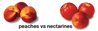 Do You Prefer Peaches or Nectarines?