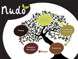 Nudo Is Neato! Adopt an Olive Tree of Your Own!