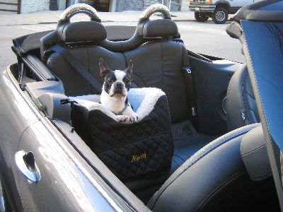 Pampered Pals: Doggies Stylin' Car Seat