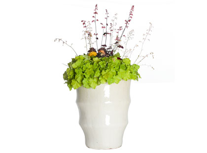insanely expensive potted plant - love or hate? (ignore the price!)