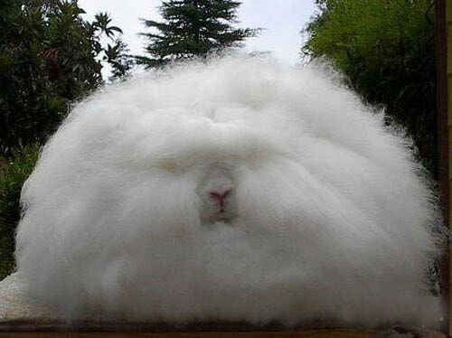 Who Coughed Up This Fur Ball?
