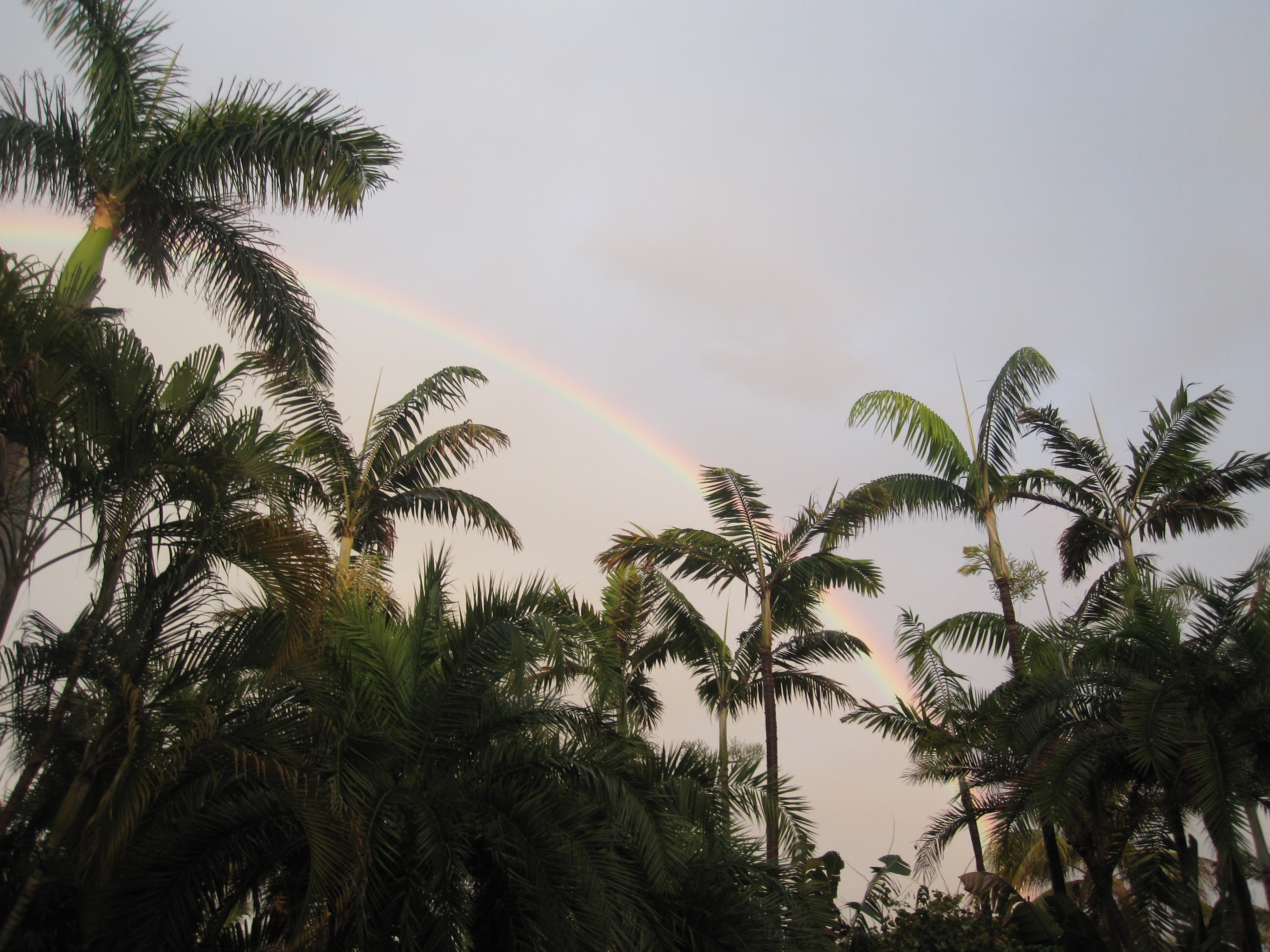 Sure enough, the rain let up and a beautiful rainbow appeared. Did Sandra plan that?