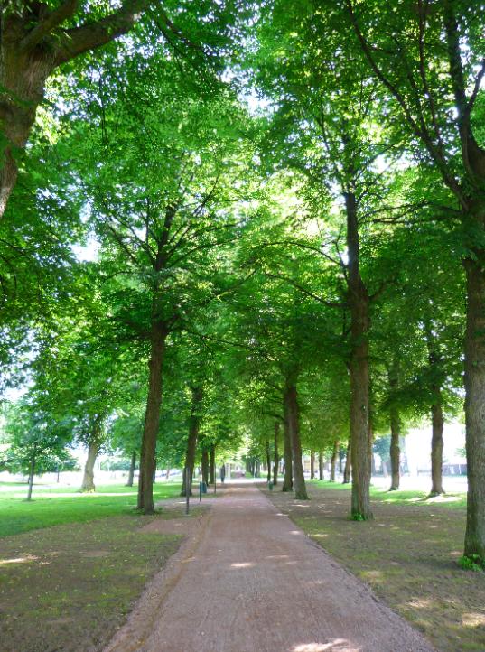 leafy walkways