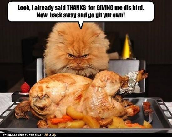2afa6a793ce821b9_h8F60F03F thanksgiving memes popsugar tech,Memes De Thanksgiving