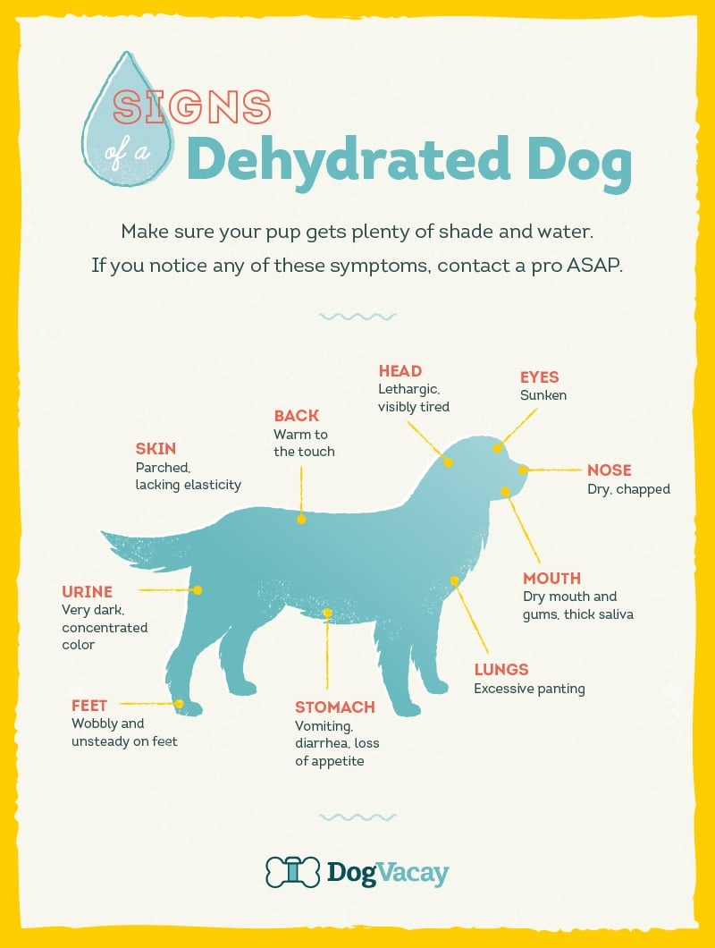 How Can You Tell If Your Dogs Dehydrated
