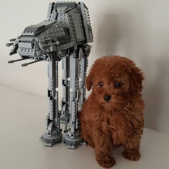 Jacob Tremblay's Dog, Rey