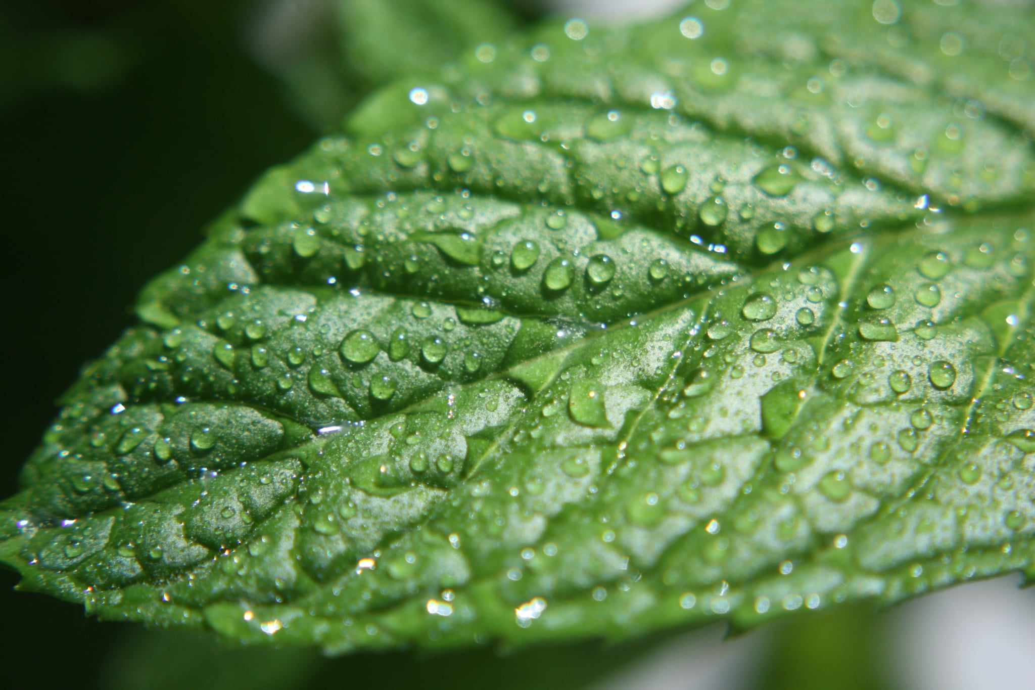 20 Nifty Reasons to Use Peppermint Oil Around the House