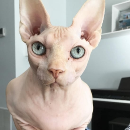 Hairless Cats on Instagram