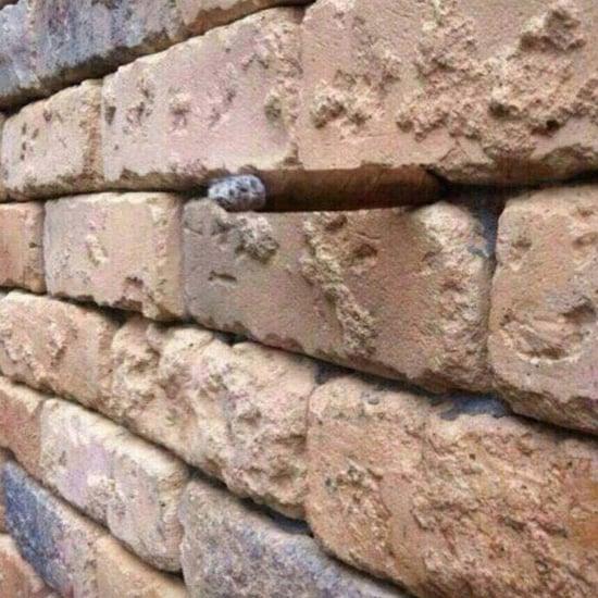 Brick Wall Optical Illusion Photo